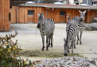 Neue Huftierstallung im Zoo Karlsruhe