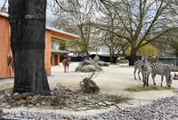 Zoo Karlsruhe: Zebras und Elenantilopen auf der Afrika-Savanne