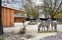 Zoo Karlsruhe: Neue Stallungen für Zebras und Elenantilope